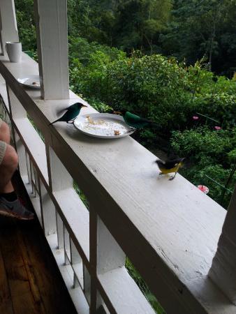 Asa Wright Nature Centre and Lodge: hummingbirds this close