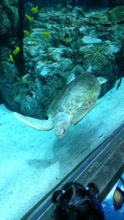 Sea Turtle Photo De Aquarium Of The Pacific Long Beach