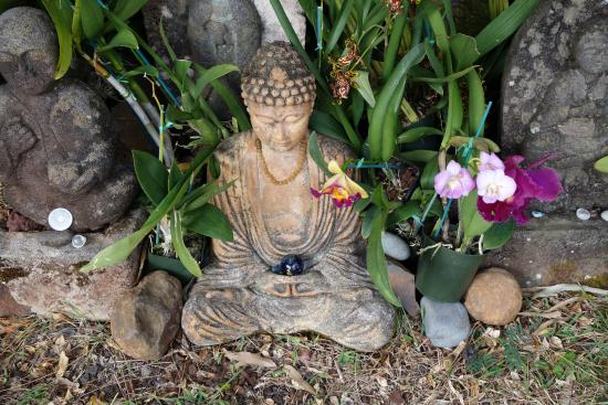 Lawai International Center: A statue of Buddha surrounded by beautiful orchids. There is a plethora of orchids here