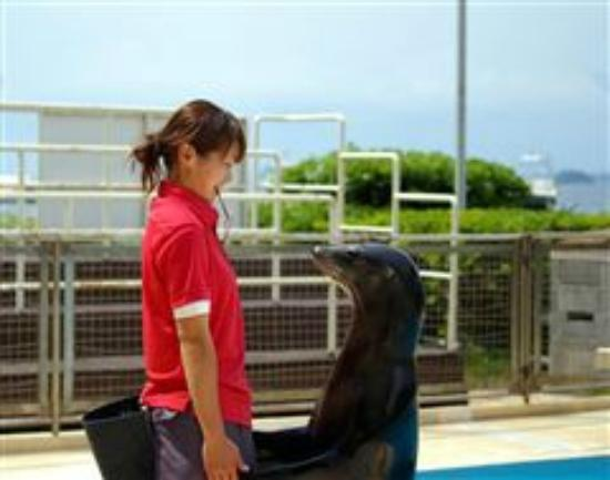 Awashima Marine Park: アシカショー トレーナーとアシカ