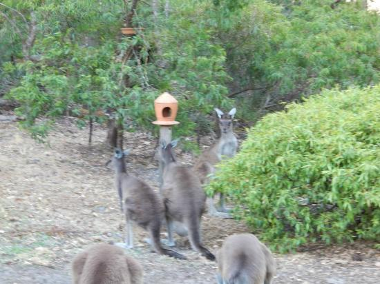 Yelverton Brook Eco Spa Retreat & Conservation Sanctuary: There are birdfeeders, possum feeders and specialised animal food supplied.