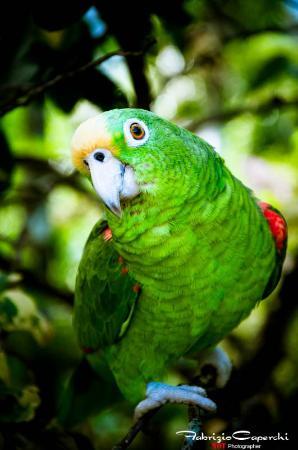 Hostal Cariguana: Pappagalli che salutano