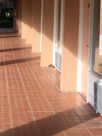 Grand Palms Hotel, Spa and Golf Resort: Rat in the hallway