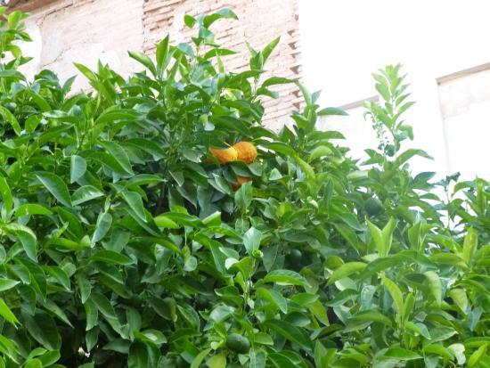 generalife naranjas