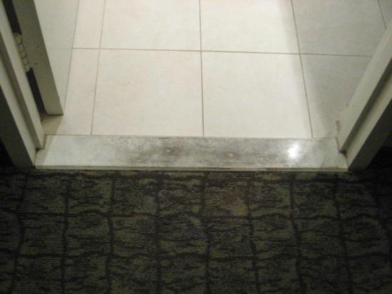DoubleTree by Hilton Hotel Deerfield Beach - Boca Raton: Filthy entry to bathroom