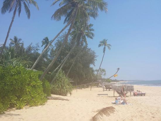 Ganesh Garden Beach Cabanas: La plage