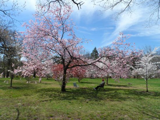 Highland Park: Encanto - Cerejeiras em Flores
