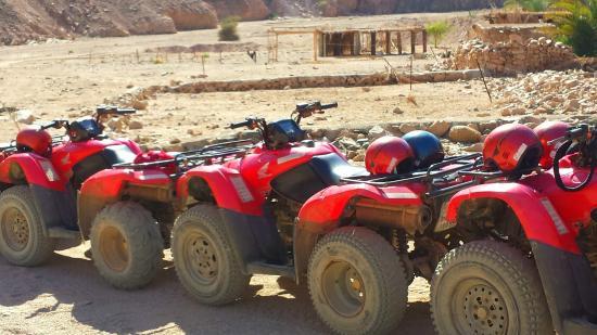 New Dawn Tours - Day Tours : Gita nel deserto in quad