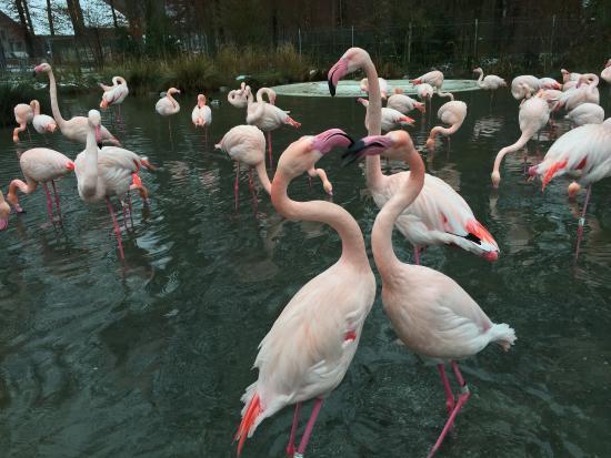 flamingos bild von tierpark d hlh lzli bern tripadvisor. Black Bedroom Furniture Sets. Home Design Ideas