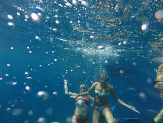 Born to Rhumb Charters: Great snorkeling all day long!