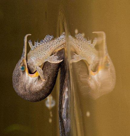 SouthWild Pantanal Lodge: The Neotropic Cormorant caught dinner at SouthWild Pantanal!