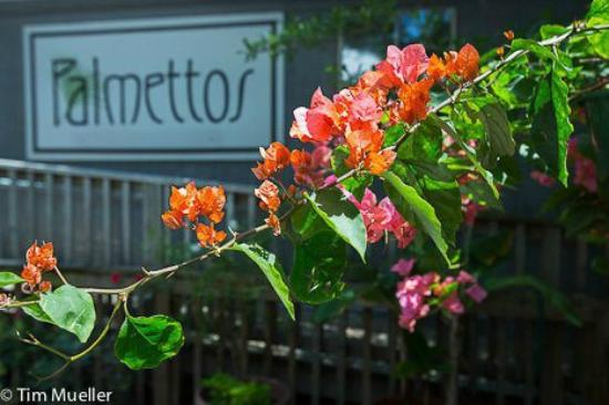 Palmettos on the Bayou: palmettos