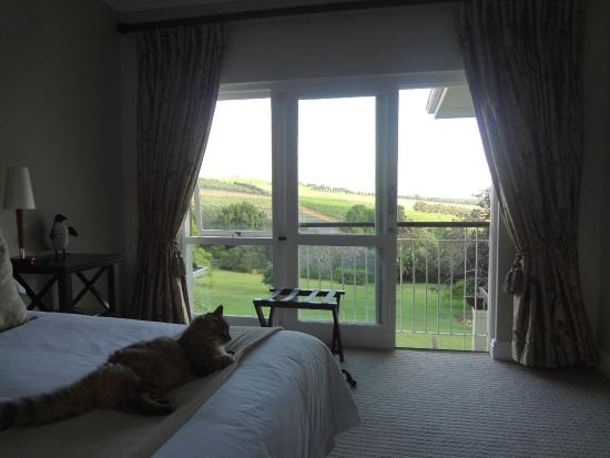 Sugarbird Manor : Our room overlooking the vineyards and Devon Valley