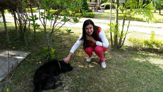 Ban Rai Tin Thai Ngarm Eco Lodge: Проживает 2 собаки