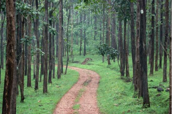 At bhadra tiger sanctuary - Picture of Bhadra Wildlife