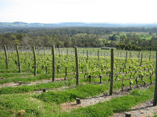 Grey Sands Vineyard
