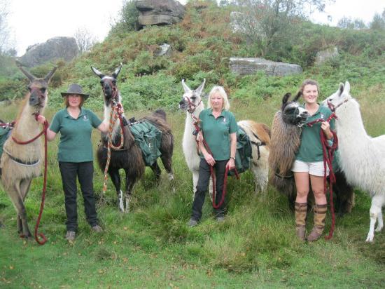 Nidderdale Llamas: Trek to Brimham Rocks !