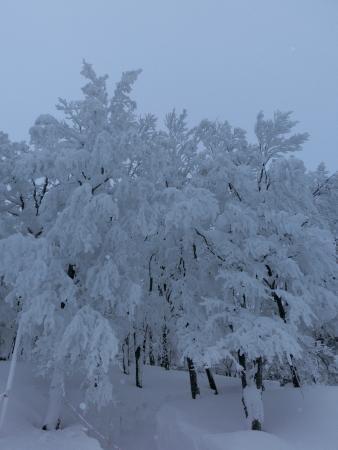 Rime on Trees at Zao: 樹氷高原駅近くの樹氷
