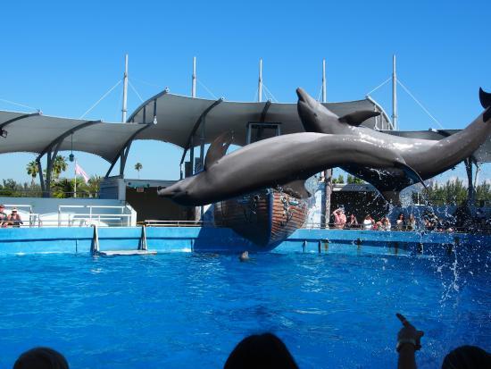 Miami Seaquarium - show dos golfinhos - Picture of Miami Seaquarium ...