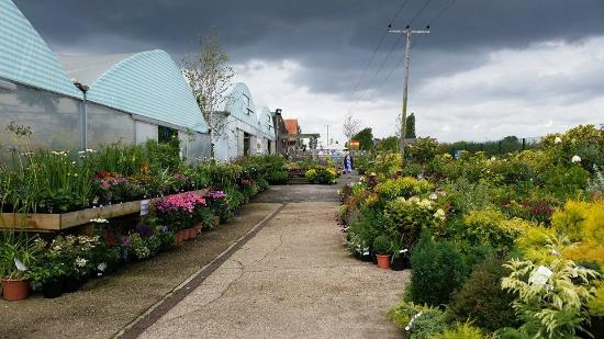 Hollybeck Nurseries