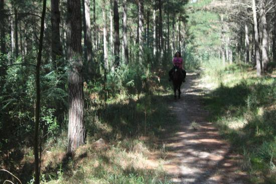 Garden Route Horse Trails : Forest Ride
