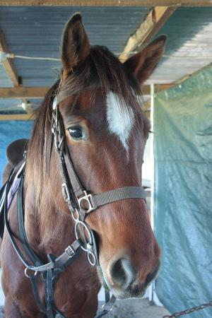 Garden Route Horse Trails : My beautiful Horse