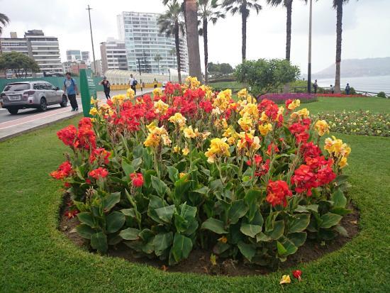 Canteiro de flores picture of el parque del amor lima for Plantas ornamentales para parques