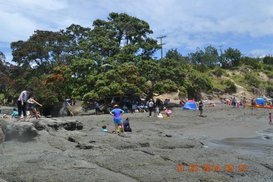 Goat Island Marine Reserve: Beach view