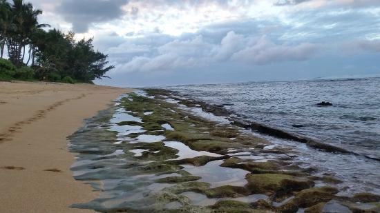 Hanalei Colony Resort: Beach view 2