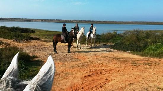Pinetrees Horse Riding: Fabulous 3 hour hack out from Pinetrees Riding Centre