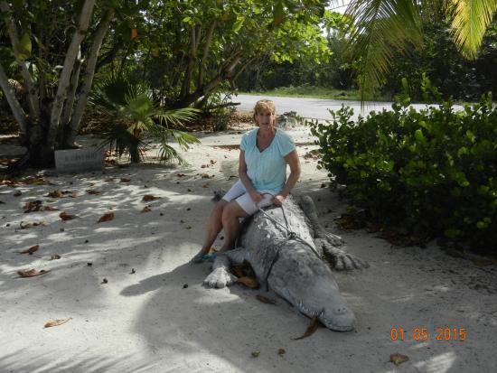 Good Davinoffu0027s Concrete Sculpture Garden: Me On Alligator