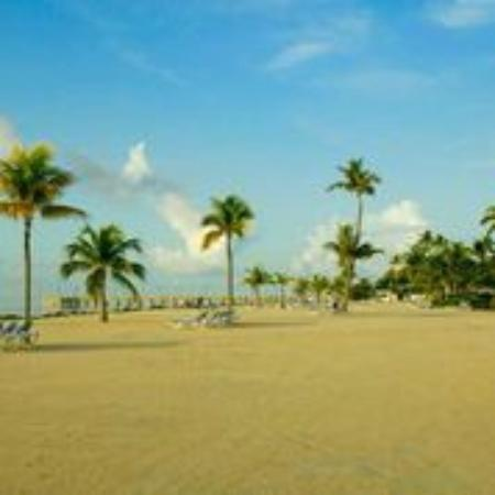 Islander Resort, a Guy Harvey Outpost : Beach