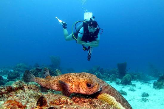 Sun Reef Village: Begegnung mit Igelfisch (Hausriff)