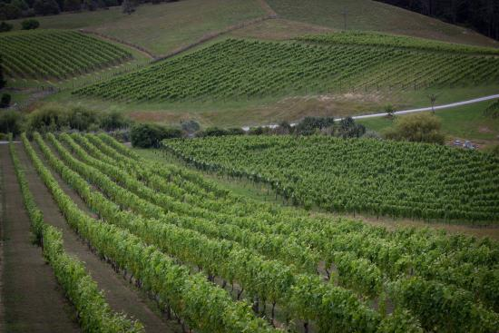 Boutique Wine Tours -  Tours: The views from Mahurangi River Winery