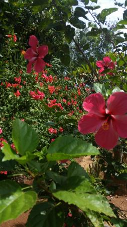 Jungle Flower Guest House: From the beutiful Garden