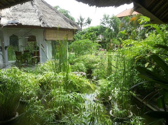 Bali Hidden Paradise Seminyak : Beautiful garden