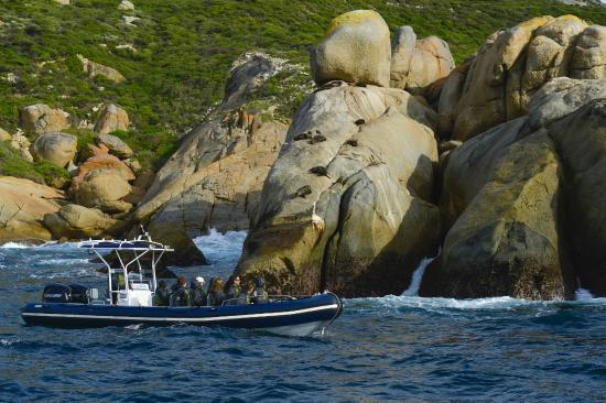Cruise To Famous Breaksea Island Picture Of Albany