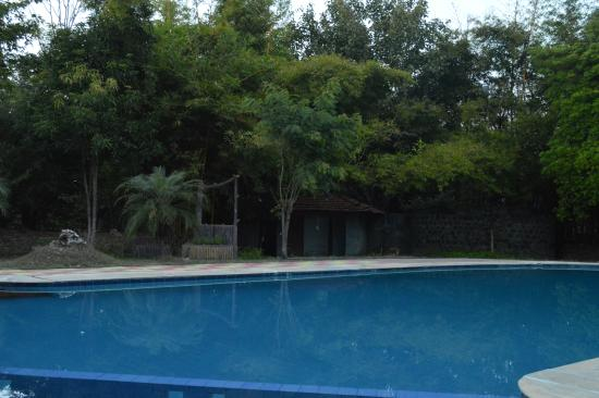 Mogli Resort : swimming pool