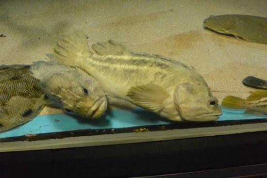 Marinepia Matsushima Aquarium: 魚も眠ってます
