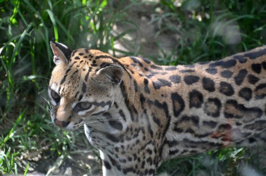 AMARU Bioparque Cuenca Zoologico: Toller Natur-Zoo mit Blück über Cuenca