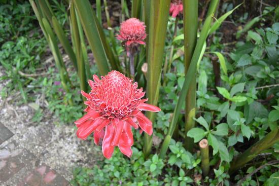 Can-olin Butterfly Sanctuary: Красивый цветок