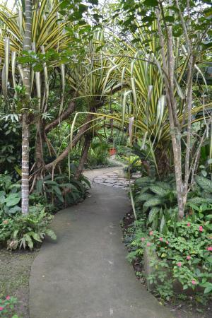 Can-olin Butterfly Sanctuary: тропинка в тропики