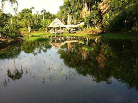 Amazonas Sinchicuy Lodge: Alrededores