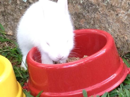 Mairiporã, SP: Havia um cercado onde tinha coelhos <3