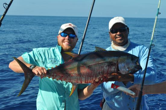 Дрейк-Бэй, Коста-Рика: Yellow Fin Tuna caught on a top water popper