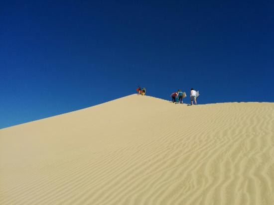 Explore - Dune Rider Cape Reinga: Sand slide on boogie boards.....the 60 plus folk did it and had a blast....safe as houses :-)
