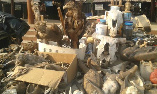 Marché aux fétiches : Dried  animal parts