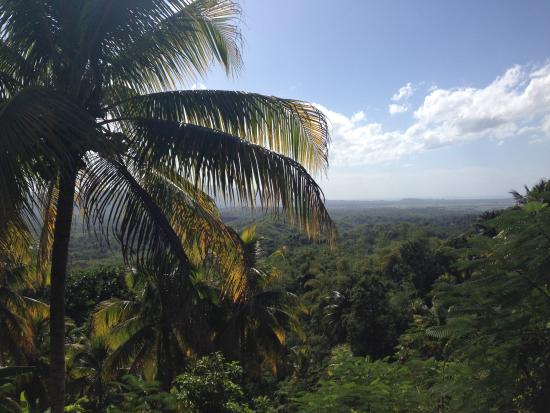 Mountain View Picture Of Damion Jamaica Tours Day Tours