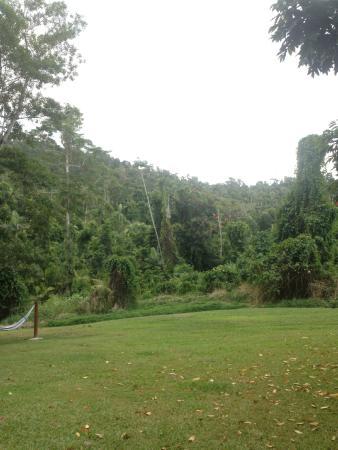 Jackaroo Treehouse Mission Beach : Las otaczający hostel