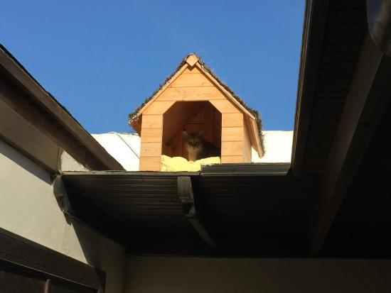Alondra Villas & Suites : The Cat House